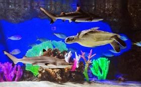 三宮駅近☆サメや熱帯魚に囲まれての二次会!?